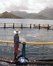 Mauritius has identified potential fish breeding sites around the island for lease to investors.