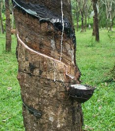 Investors have the opportunity to get involved in secondary processing activities within Liberia's rubber sub-sector.