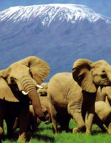 Kenya's tourism industry largely revolves around the game reserves and beach resorts.