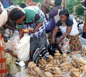 Almost half of Zambia's working population works in the informal sector in small and microbusinesses.