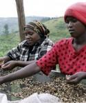 Tanzania's coffee industry