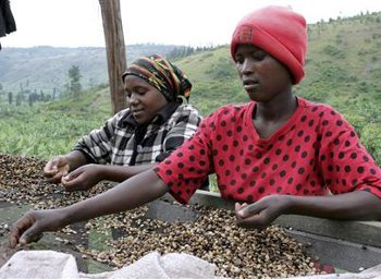 The people of Mbinga District is heavily dependent on the coffee industry.