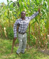 Maize Zambia