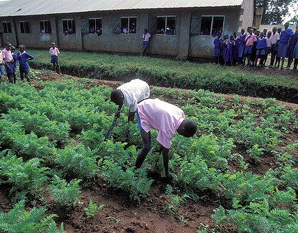 Involving the youth in agriculture