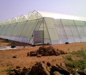 Greenhouses protect crops from too much heat or cold, shield plants from dust storms and blizzards, and help to keep out pests.