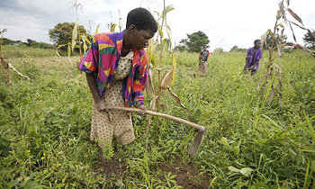 Small-scale farmers in Africa will be playing a key role in feeding the world over the next decade or two.