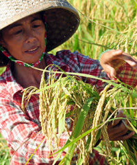 Chinese agriculture has managed to raise hundreds of millions of peasants from rural poverty in the past 30 years.
