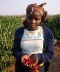 The investment in the Northern Coffee Corporation is expected to lift the morale of Zambia's coffee farmers.