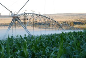 Centre pivot irrigation is the most cost effective method of irrigating large areas.