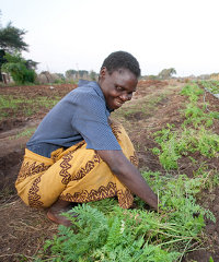 Farmers in Livingstone, Zambia are supplying vegetables to a number of hotels and retailers.