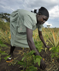 A southern Sudanese women working in the fields of an cooperative farming project.