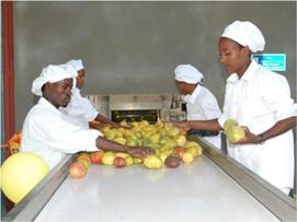 africaJUICE workers sort passion fruit at the beginning of the production line.