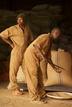 Employees at the dry mill prepare bags of green  coffee beans for shipment to Europe and America.