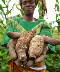 Agricultural commercialisation in Tanzania remains low.