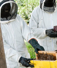 Honey Care Africa is working with smallholder farmers in Kenya and South Sudan.