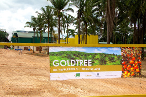 Through its African Agriculture Fund, Phatisa raised funds to build the Goldtree palm oil mill in Sierra Leone.