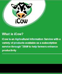 iCow is a Kenyan online platform that aids farmers.