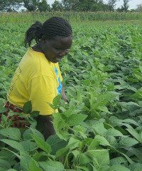 Divine Masters in Uganda works with out-grower farmer families.