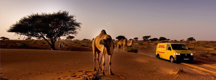 DHL_camel
