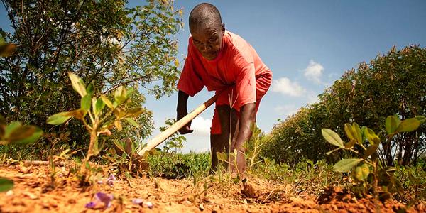 Agriculture harvest or planting