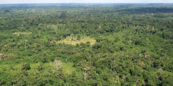 Liberia forest 600x300