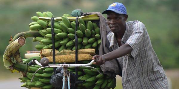 Trade agriculture banana 600x300