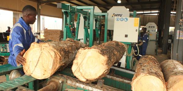 400mm diameter logs entering Wood-Mizer's TVS primary breakdown headrig.