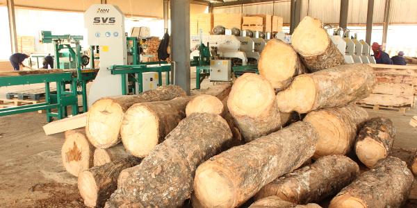 Wood-Mizer's green industrial line working in Liberia.