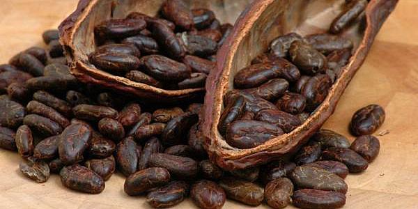 cocoa beans 600x300