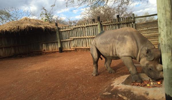 Eliska rhino 600x350
