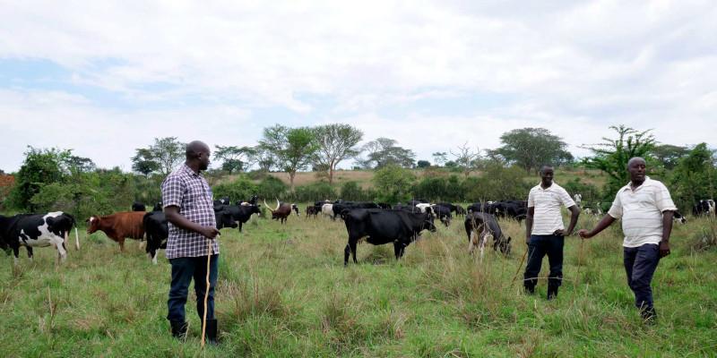 Pearl Dairy in Uganda