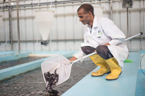 Verod has invested in Nigeria's Shaldag fish farm, which produces processed, smoked catfish.