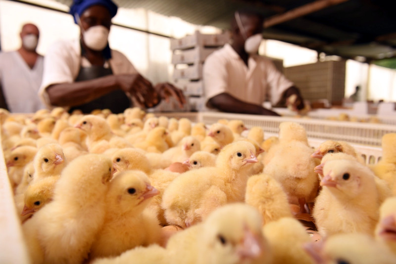 AAC invested in Uganda's Biyinzika Enterprises, an integrated poultry business.