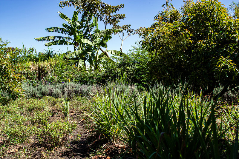 Most of Perennial Foods Group's partner farmers grow a multi-tiered range of intercropped trees, shrubs and ground crops, rather than fields full of a single crop.