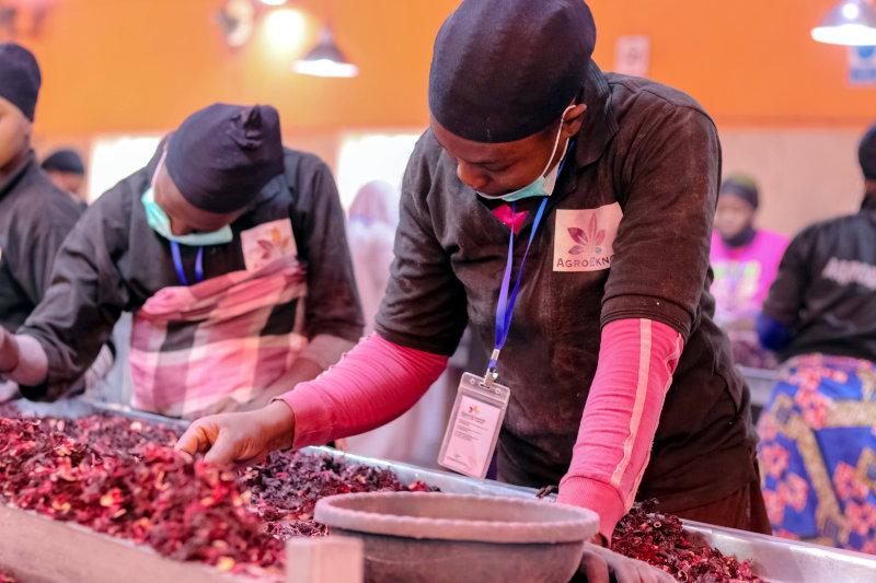 AgroEknor employees processing hibiscus flowers.