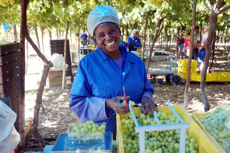 SilverStreet Capital has invested in table grape farming in Namibia