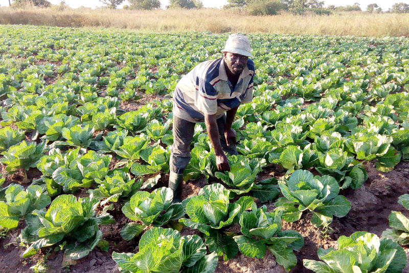 The area surrounding Tamale has strong agricultural potential.