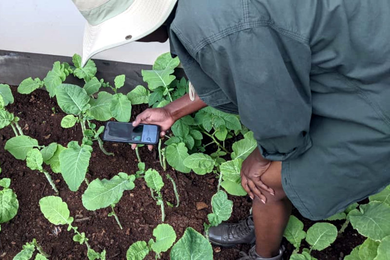 AgriPredict provides tools to help farmers manage risks such as droughts, pests and diseases.
