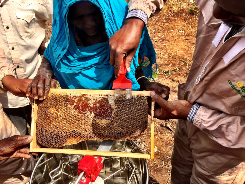 Central Park Bees buys honey from about 1,300 small-scale farmers in Tanzania.
