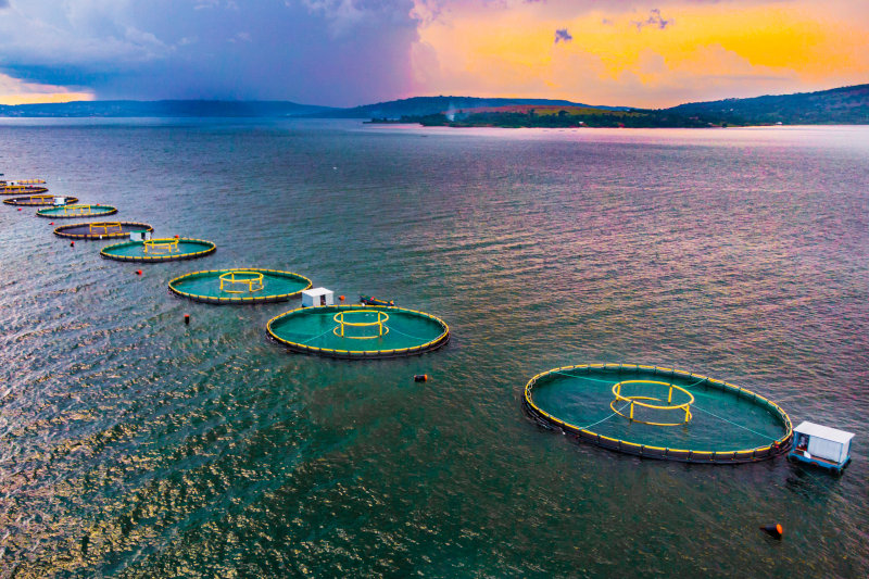 FirstWave Group has fish farming operations in Zambia and Uganda.