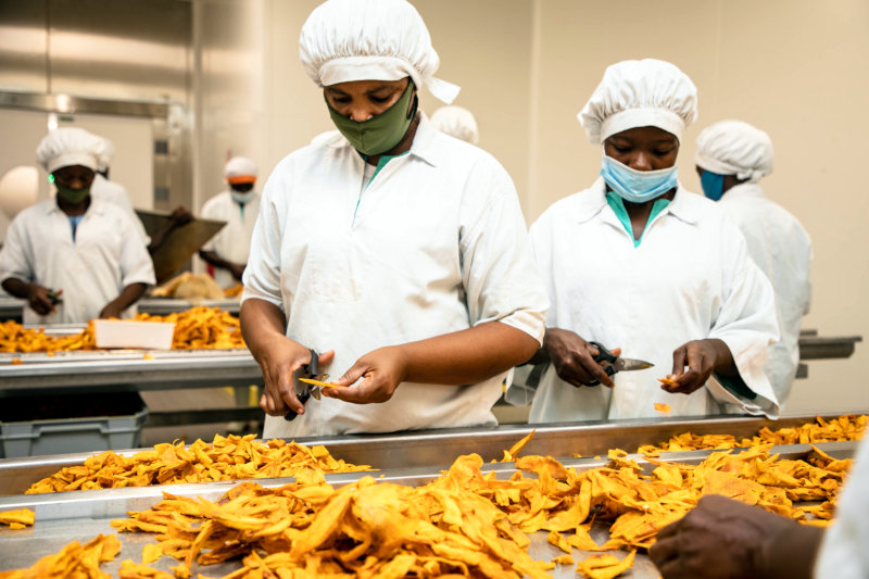 Mango processing at HPW's facility in Ghana.