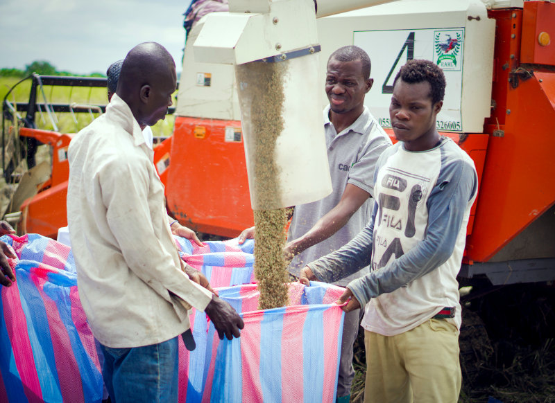 Agro Kings works with over 300 small-scale rice farmers.