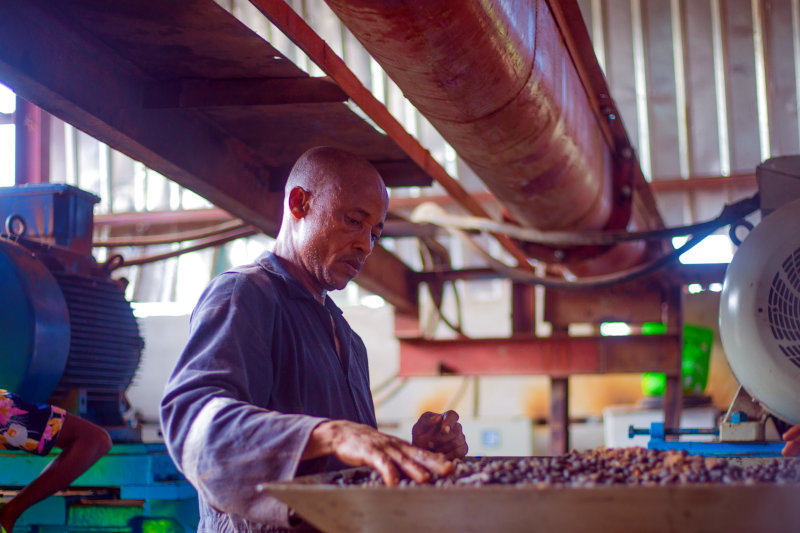 Releaf has developed technology to process oil palm nuts.