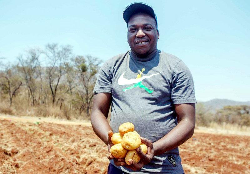 Baldwin Mazango holding potatoes during a harvesting period at his farm.